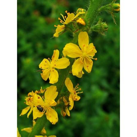 Herbalia Bach Bloesem AGRIMONY NR 1 Agavesiroop