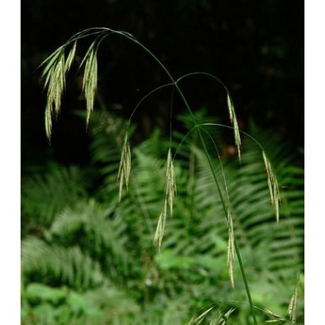 Herbalia Bach Bloesem WILD OAT NR 36 20ml