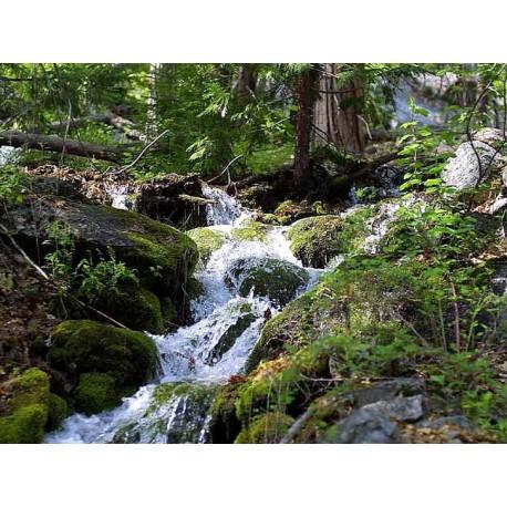 Herbalia Bach Bloesem ROCK WATER NR 27